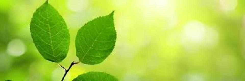 Harga Obat Herbal Pelangsing